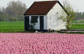 Eikenhorstlaan 8bij nr., Voorhout